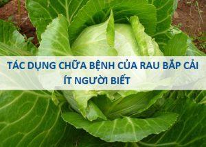 Bất ngờ với tác dụng chữa bệnh của rau bắp cải mà ít người biết