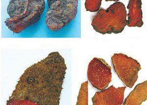 Tác dụng chữa bệnh của cây Hà thủ ô đỏ